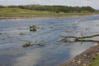 River debris 1