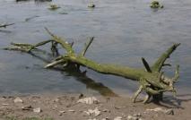 River debris2