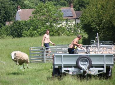 Sheep and farmers