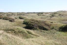 dune trek 4
