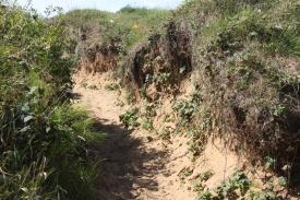 dune trek 5