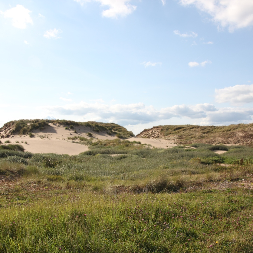 Dunes on either side 2