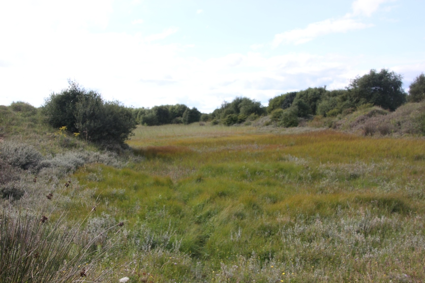 Grasses and rushes