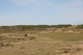 Heathland (3)