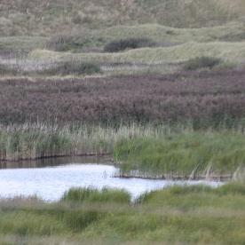 Marshland 2