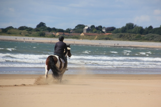 Pony trekers