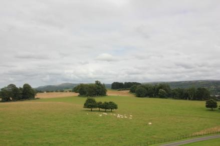 Dinefwr Parkland