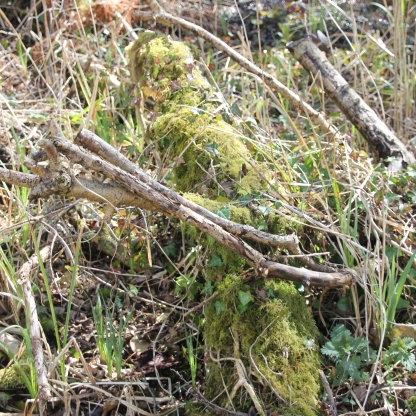 Mosses on logs