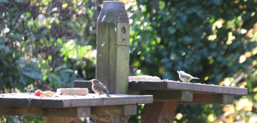 Blue Tit and Nuthatch