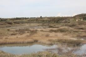 Wetlands perspective