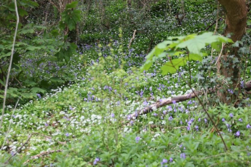 Climb thro' wood Caswell