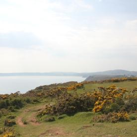 Heath-land