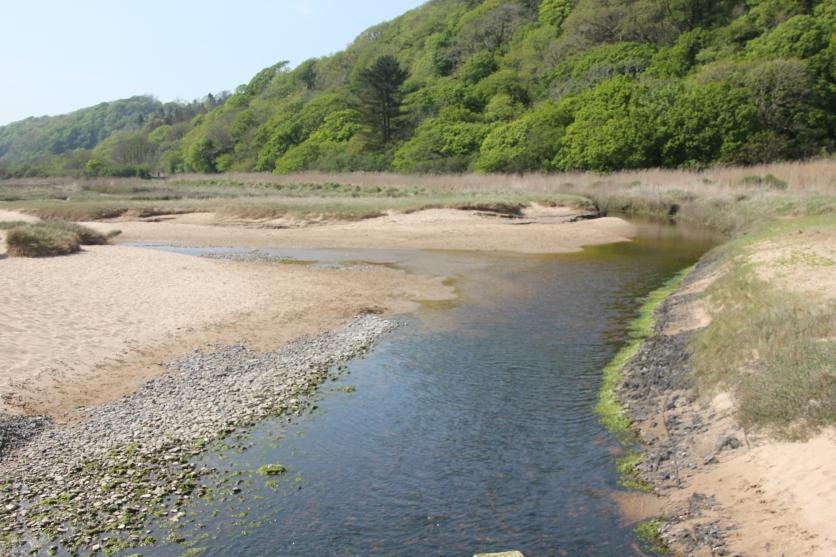 Oxwich Marsh Stream 2