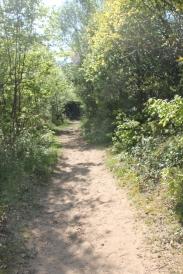 Path into NNR Oxwich