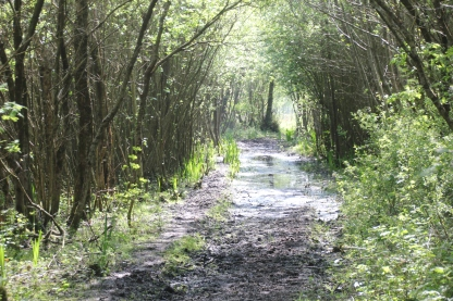 Path NNR WET