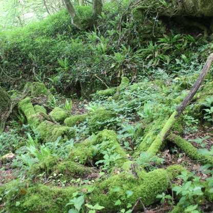 ferns-and-moss