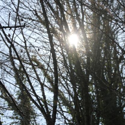 Sunshine thro trees