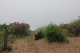 thro-sand-dunes