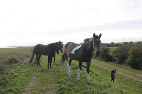 horses-following