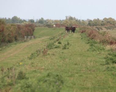 horses-on-path