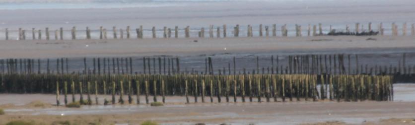 jetty-posts