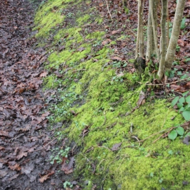 Moss covered banks