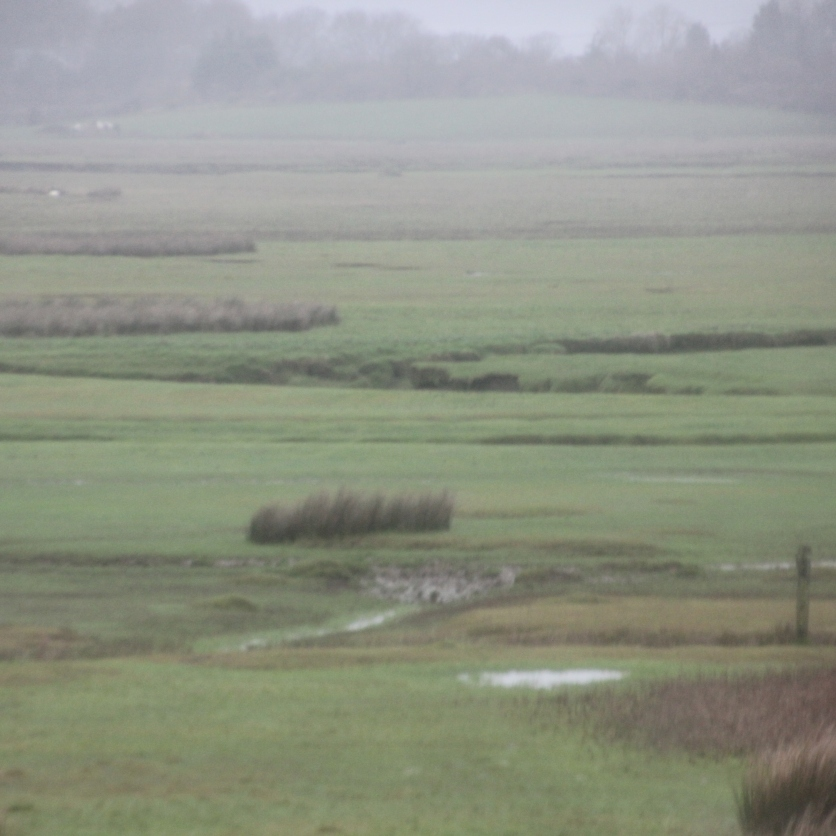 mud-flats-marsh-near-bridge