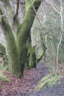 thro-trees-4