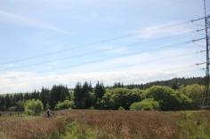 Conifer forests