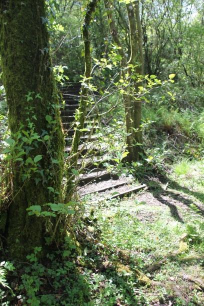 Steps Brynna