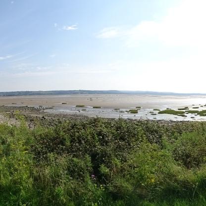 Estuary 2