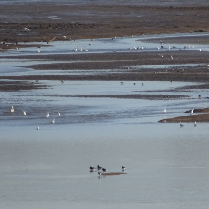 birds on mudflats 1
