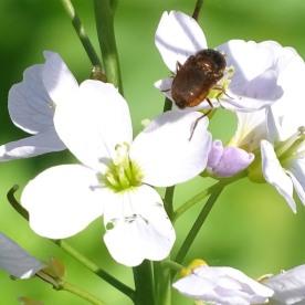 A Beetle ?