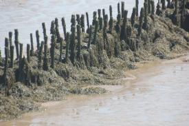 seaweed strewn sea defences