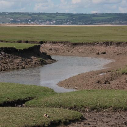 Llandimore Marsh