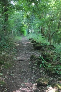 Cwm Ivy Woods