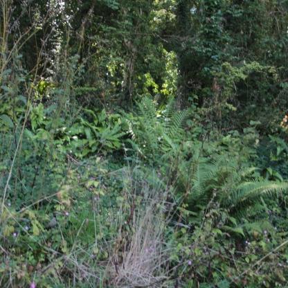 Woodland Plantys