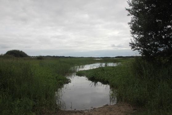 Waterlogged areas