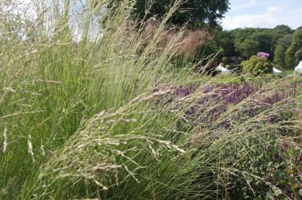 Meadow Grasses 1
