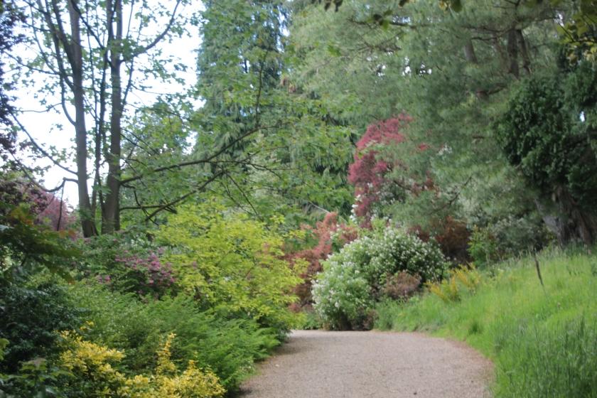 Rhododendron Walk 1